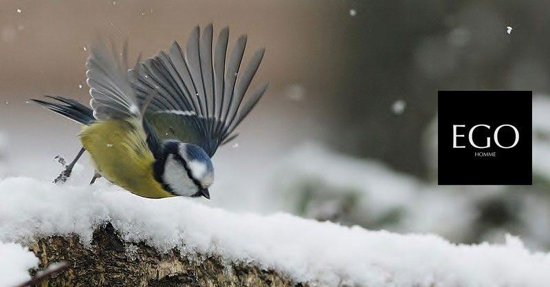 Donnez des ailes à votre élégance…